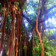 Banyan Tree Art Print