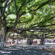 Banyan Tree Art Print
