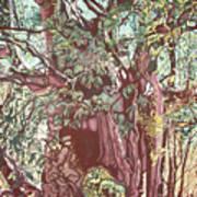 Baoba In Foliage Art Print