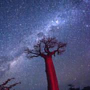 Baobab Milky Way Art Print
