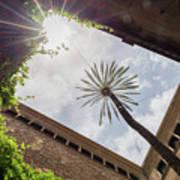 Barcelona Courtyard With Palm Tree Art Print