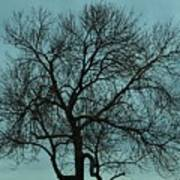 Bare Branches And Storm Clouds Art Print