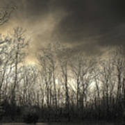 Bare Trees In A Winter Sunset Art Print