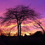 Bare Trees In Gorgeous Sunset Art Print