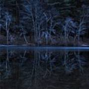 Bare Trees Reflected Art Print