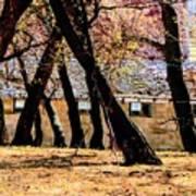 Barn Behind Trees Art Print