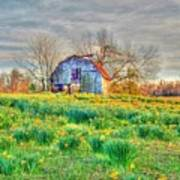 Barn In Field Of Flowers Print by Geary Barr