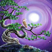 Barn Owl In Twisted Pine Tree Art Print