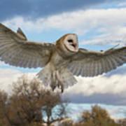 Barn Owl Makes A Happy Landing Art Print