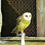 Barn Owl On The Prowl Art Print