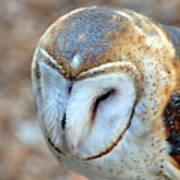 Barn Owle 1 Art Print