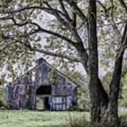 Barn Underneath The Tree Art Print
