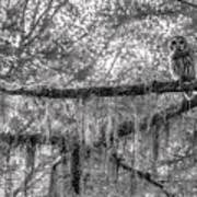 Barred Owl In Monochrome Art Print