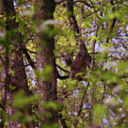 Barred Owl In The Forest Art Print