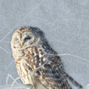 Barred Owl In The Snowstorm Art Print
