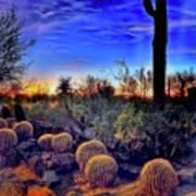 Barrel Cacti Ambling Along Art Print