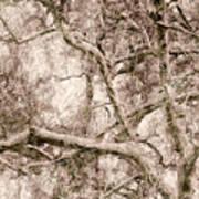 Barren Tree Art Print