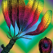Basia Plant Art Print