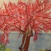 Bask In Blooming Beauty Art Print