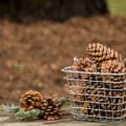 Basket Of Cones Art Print