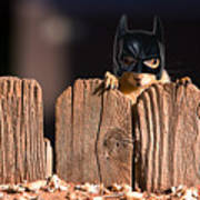 Bat Squirrel  The Cape Crusader Known For Putting Away Nuts.  Art Print