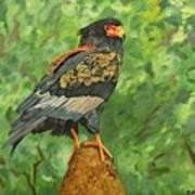 Bataleur Eagle Art Print