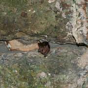 Bats Inside The Pyramid At Grupo Nohoch Mul At The Coba Ruins  Art Print