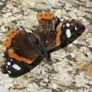 Battered Butterfly Art Print