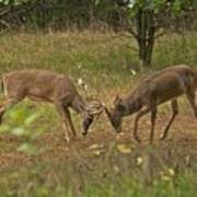 Battling Whitetails 0102 Art Print by Michael Peychich