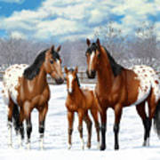 Bay Appaloosa Horses In Winter Pasture Art Print