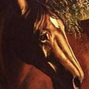 Bay Horse Art Horse Portrait Circe At Sunset Art Print