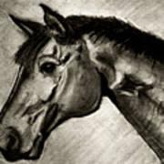 My Friend The Bay Horse Art Print