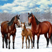 Bay Horses In Winter Pasture Art Print