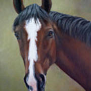 Bay Thoroughbred Horse Portrait Ottb Art Print