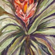 Bayonet Cactus Art Print