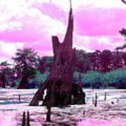 Bayou Pink Art Print