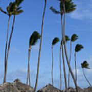 Beach Cabanas And Palm Trees Art Print