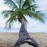 Beach Coco Art Print