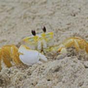 Beach Crab In Sand Art Print