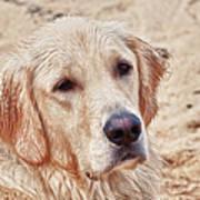 Beach Dog Art Print