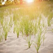 Beach Grasses Number 3 Art Print