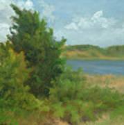 Beach Pines Art Print