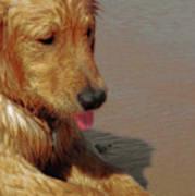 Beach Pup Art Print
