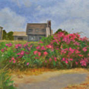 Beach Roses And Cottages Art Print
