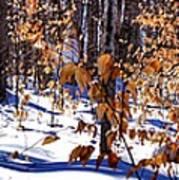 Beach Tree's In Winter Art Print