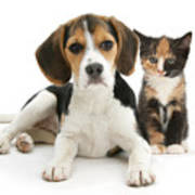 Beagle And Calico Cat Art Print
