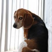 Beagle Attitude Art Print