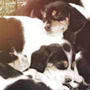 Beagle Pile Art Print