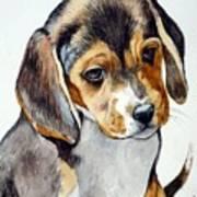 Beagle Puppy Art Print