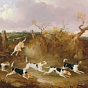 Beagles In Full Cry Art Print